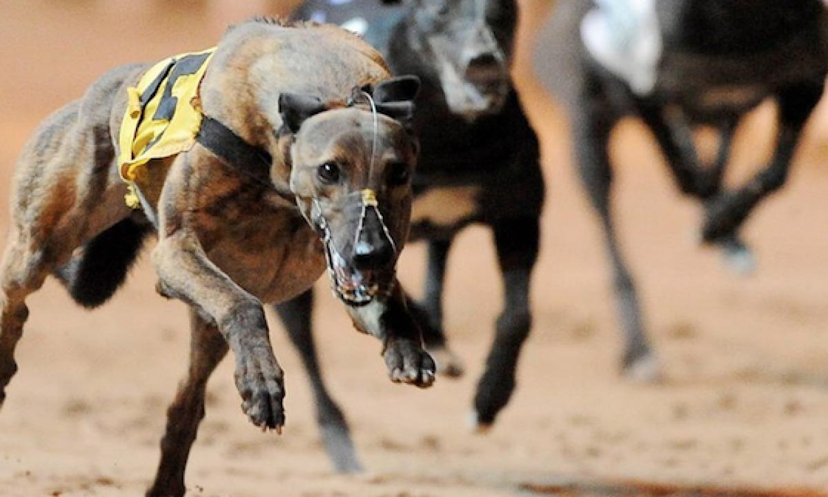 Irish greyhound derby 2021 betting line top sports betting sites online