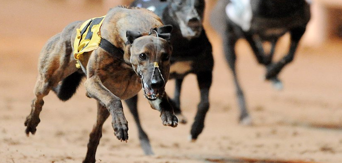 Irish greyhound derby 2021 betting lines packers saints betting line